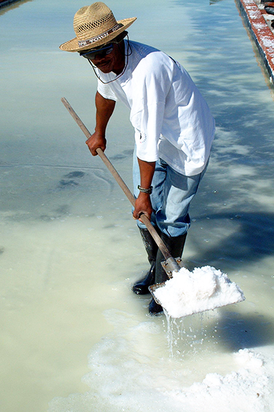 Cape Treasures Khoisan Natural Salt: Seaweed Salt - harvester scooping salt